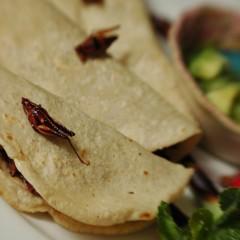 Restaurant Week in Puerto Vallarta