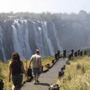 Bungee Jumping in Zambia: 365 Feet of Fun