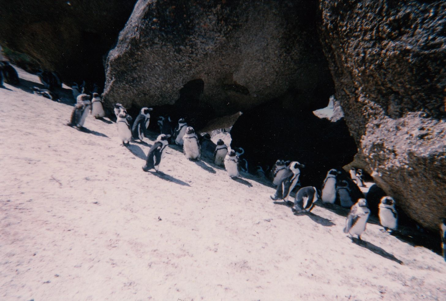 Penguins in Africa