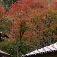 How to Stay in Japan's Ryokan