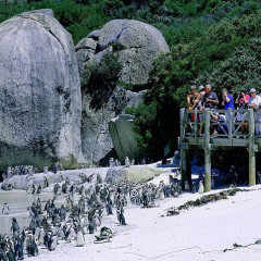 Distinctive Safari from African Travel Inc.