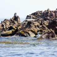La Paz, Mexico, and the Sea Lions