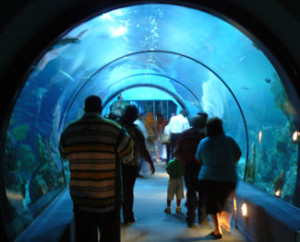 Top 5 Things To Do In Galveston Texas In 2014 In The
