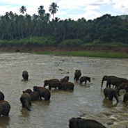 Breakfast with the Elephants of Sri Lanka