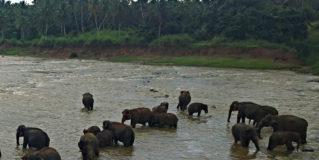 Breakfast with the Elephants of Sri Lanka