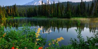 Mt. Rainier's World Famous Wildflowers