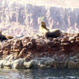 Touring Baja Sur (Interview with Ruben Maciel)