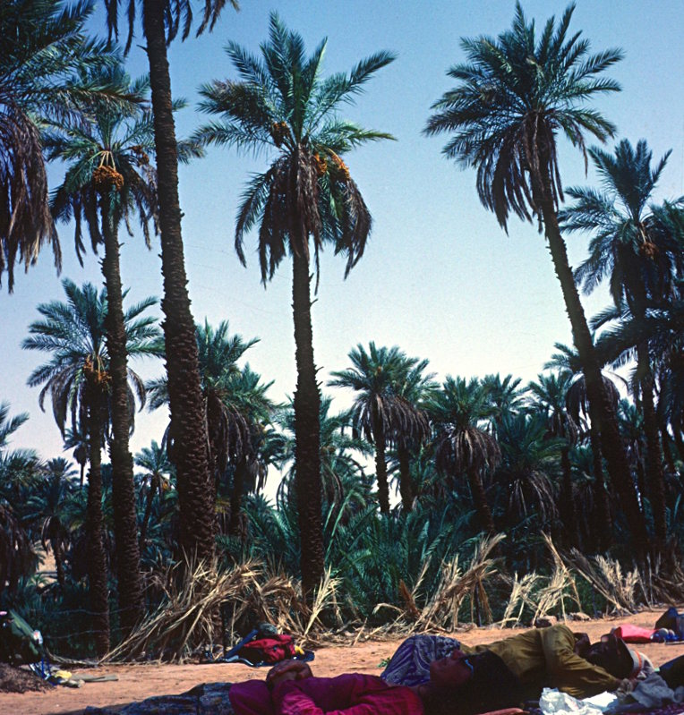 Oasis at Taghit, Algeria