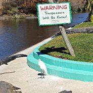 Gatorland's Gator Bait
