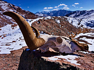 Stranded in No Man's Land on the Pamirs, <br>Where Wild Things Are
