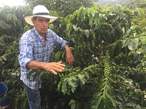 Andreas showing his coffee plants