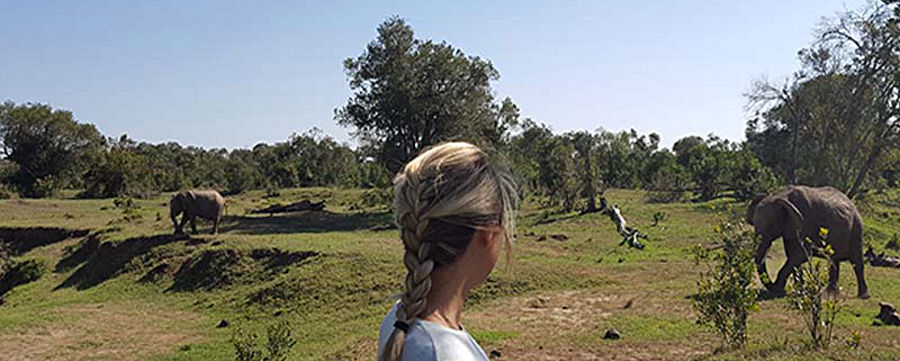 Morning with Elephants At Ol Pejeta