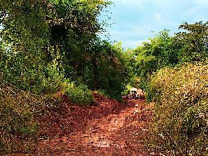 A sierra leone Red Dirt Road