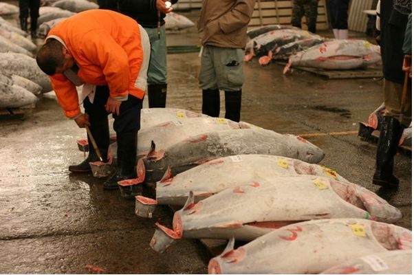 Tsukiji Market Tuna Auction Observation Area to Be Reopened Mid-January