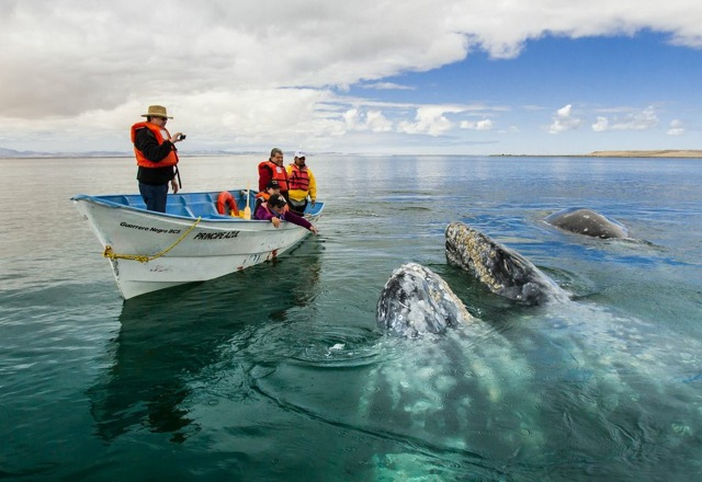Whale Watching Starts in La Paz