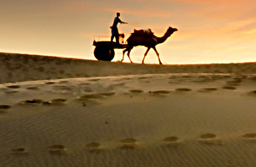 Carcass – The Thar Desert, India