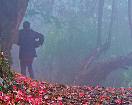Garden of the Gods: <br>Sikkim's Rhododendron Forest