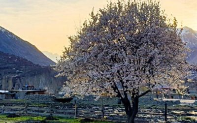 Witnessing Cherry Blossom Season  in the Hunza Valley – Pakistan