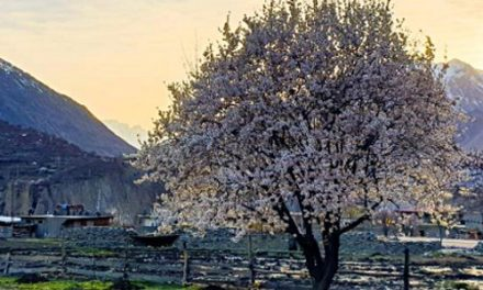 Witnessing Cherry Blossom Season <br> in the Hunza Valley – Pakistan