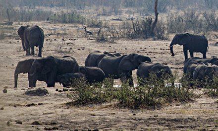 Hwange Safari Tour – Zimbabwe