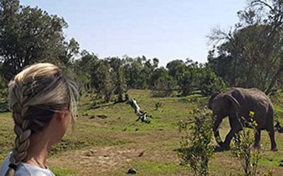 Camping With Elephants at Ol Pejeta Conservancy, Kenya